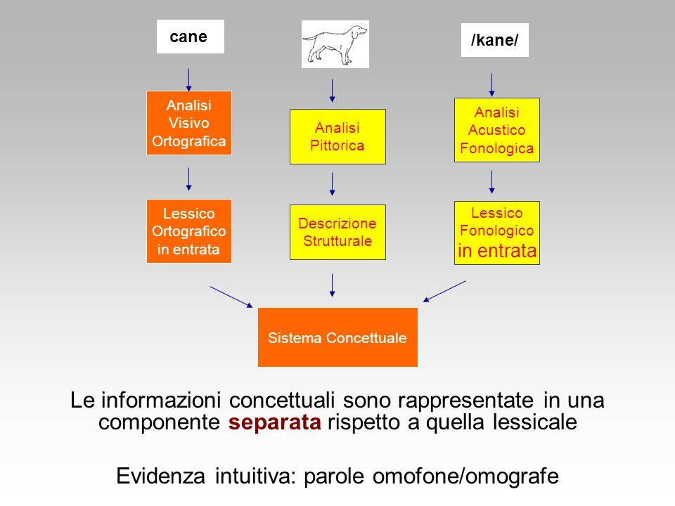 Sistema Concettuale Lessico Ortografico in entrata Descrizione Strutturale Lessico Fonologico in entrata Analisi Visivo Ortografica Analisi Acustico F