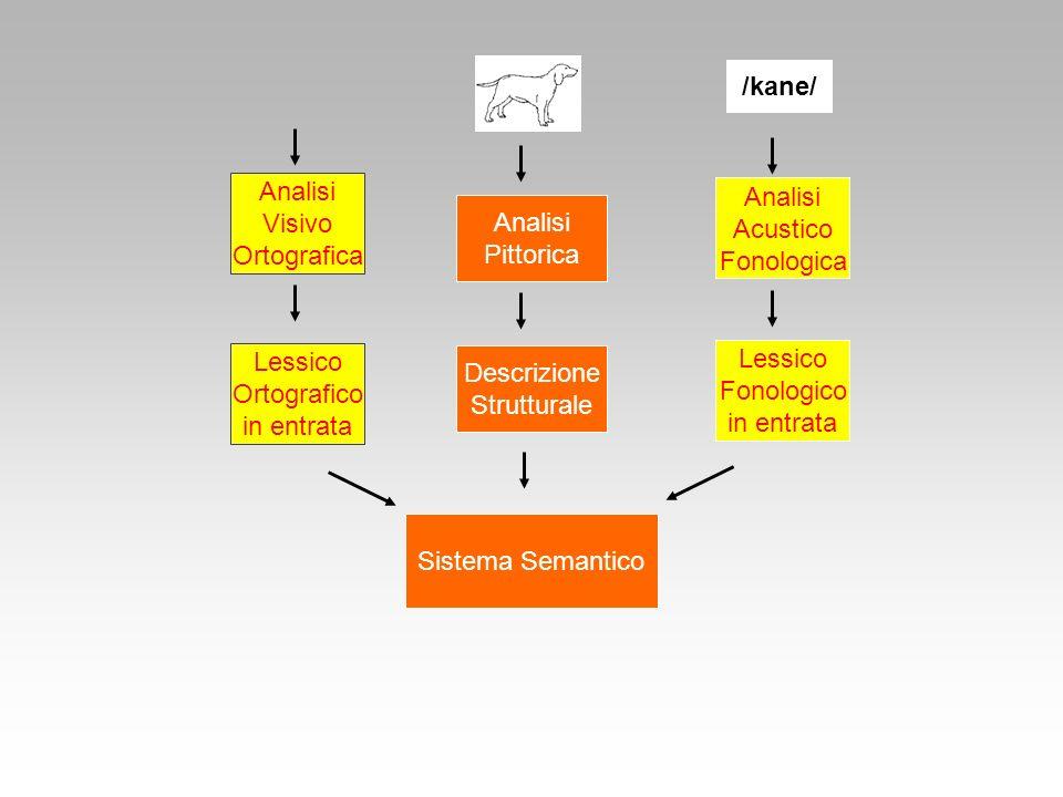 Sistema Semantico Lessico Ortografico in entrata Descrizione Strutturale Lessico Fonologico in entrata Analisi Visivo Ortografica Analisi Acustico Fon