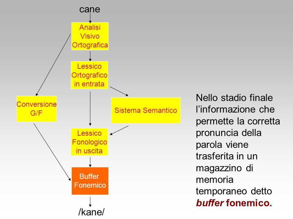 Sistema Semantico Lessico Ortografico in entrata Conversione G/F cane /kane/ Lessico Fonologico in uscita Buffer Fonemico Analisi Visivo Ortografica N