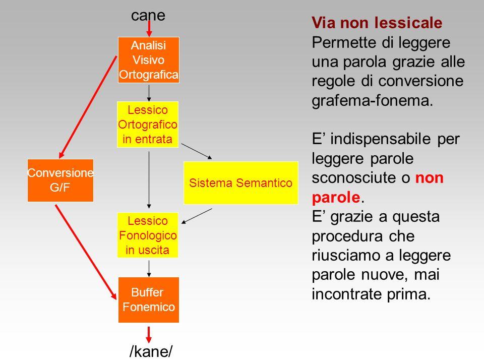 Sistema Semantico Lessico Ortografico in entrata Conversione G/F cane /kane/ Lessico Fonologico in uscita Buffer Fonemico Analisi Visivo Ortografica V