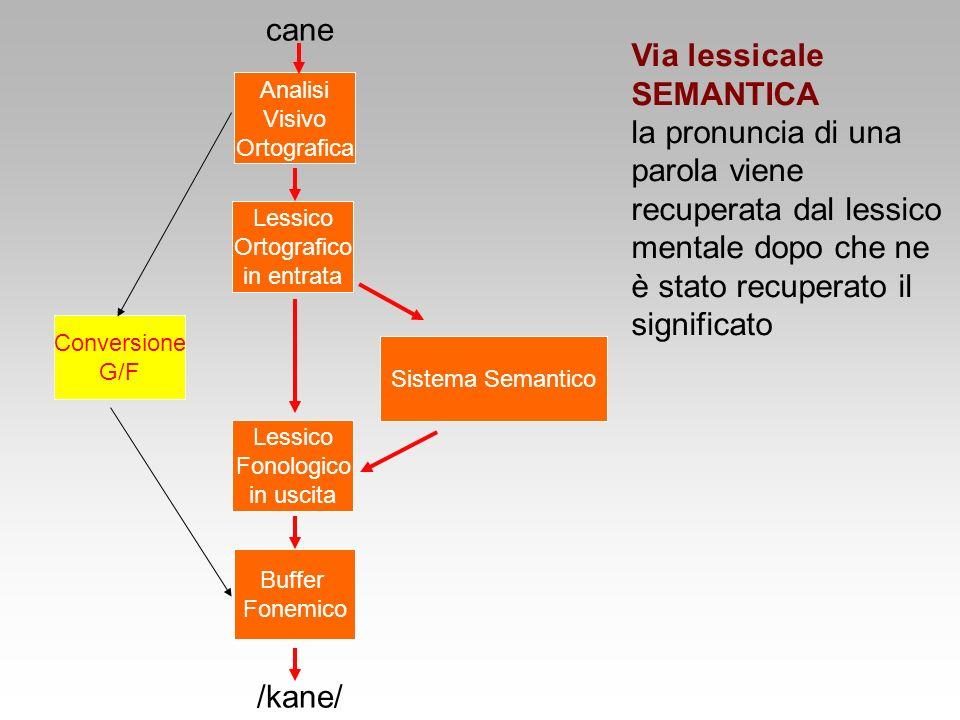 Via lessicale SEMANTICA la pronuncia di una parola viene recuperata dal lessico mentale dopo che ne è stato recuperato il significato Lessico Ortograf
