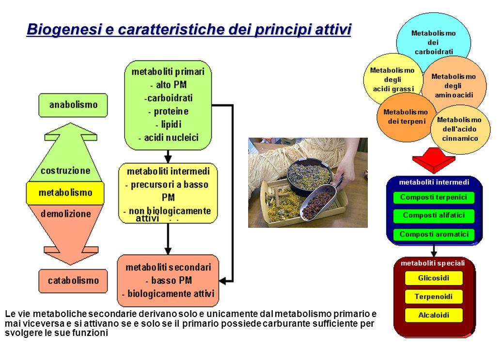 Biogenesi e caratteristiche dei principi attivi attivi Le vie metaboliche secondarie derivano solo e unicamente dal metabolismo primario e mai vicever