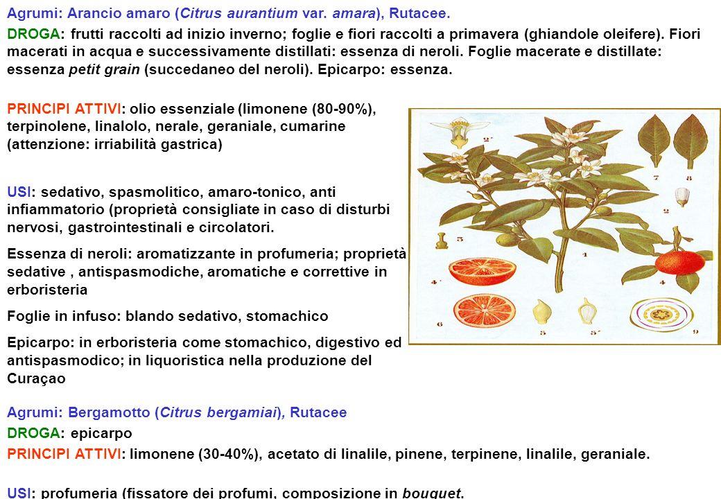 Agrumi: Arancio amaro (Citrus aurantium var. amara), Rutacee. DROGA: frutti raccolti ad inizio inverno; foglie e fiori raccolti a primavera (ghiandole