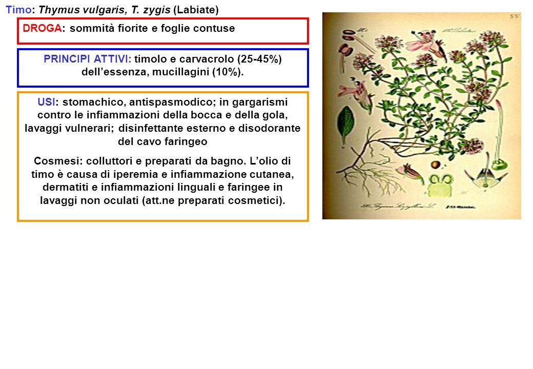 Timo: Thymus vulgaris, T. zygis (Labiate) DROGA: sommità fiorite e foglie contuse PRINCIPI ATTIVI: timolo e carvacrolo (25-45%) dellessenza, mucillagi