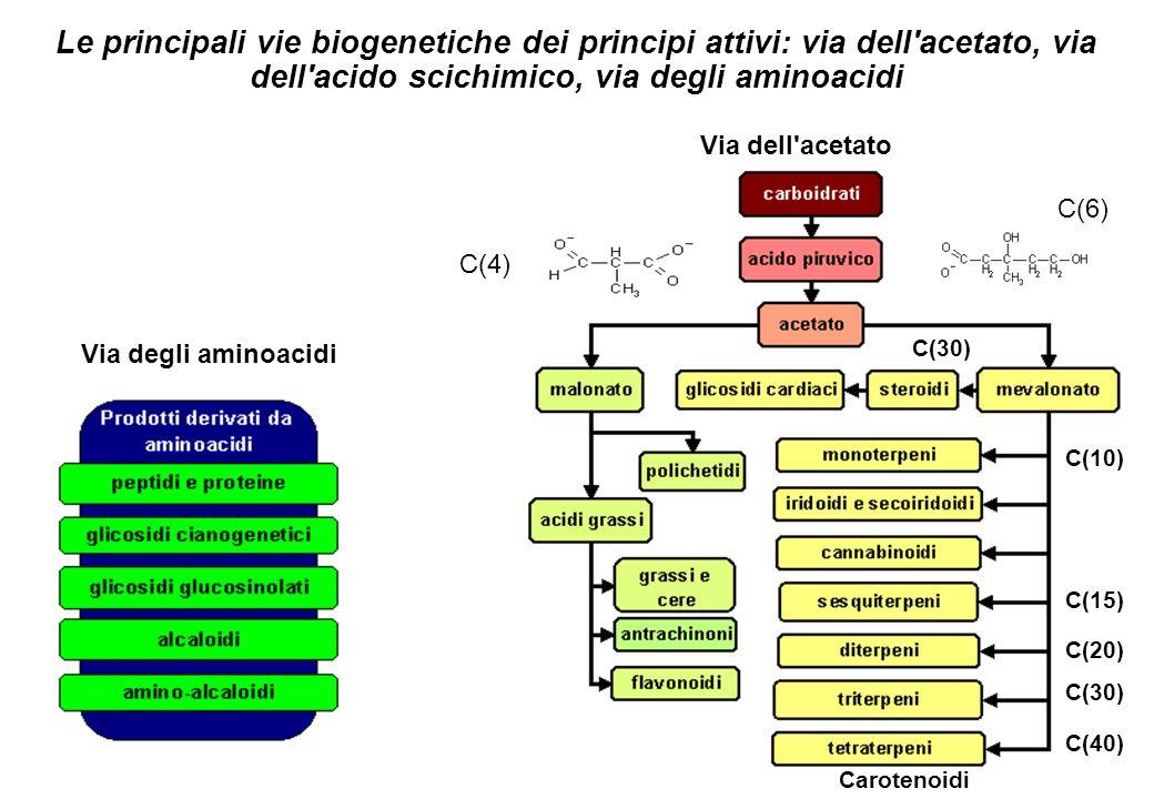 Le principali vie biogenetiche dei principi attivi: via dell'acetato, via dell'acido scichimico, via degli aminoacidi Via degli aminoacidi Via dell'ac