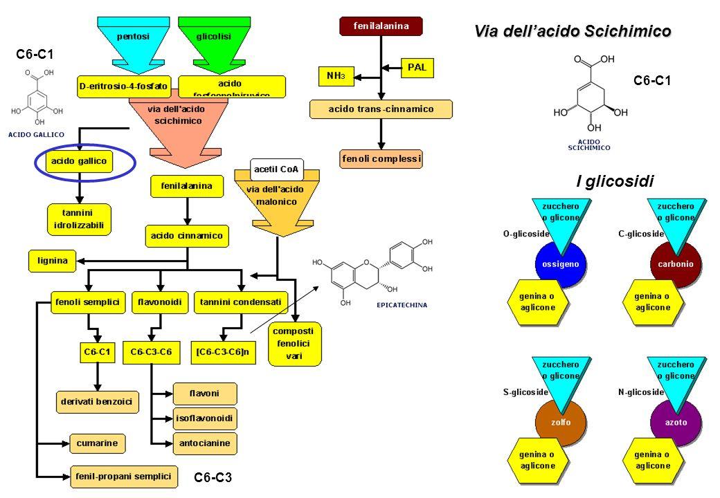 Via dellacido Scichimico I glicosidi C6-C1 C6-C3