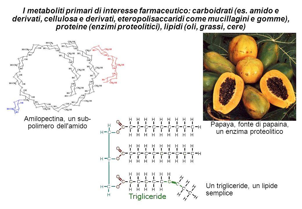I metaboliti primari di interesse farmaceutico: carboidrati (es. amido e derivati, cellulosa e derivati, eteropolisaccaridi come mucillagini e gomme),