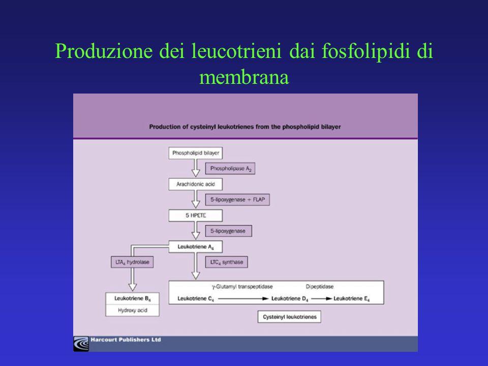 Produzione dei leucotrieni dai fosfolipidi di membrana