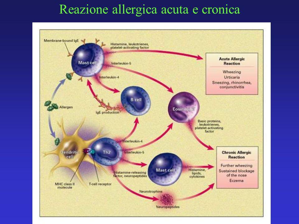 Reazione allergica acuta e cronica
