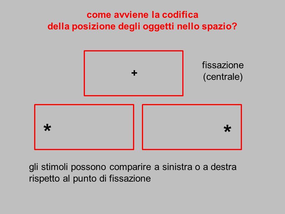 + * * come avviene la codifica della posizione degli oggetti nello spazio? fissazione (centrale) gli stimoli possono comparire a sinistra o a destra r