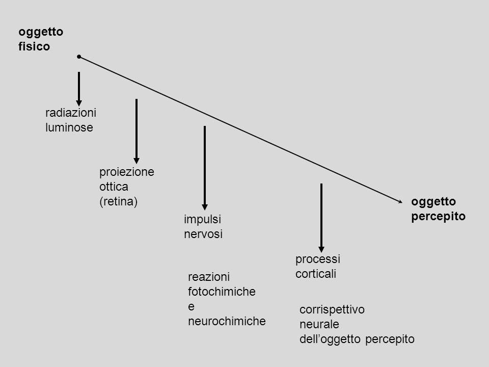 oggetto fisico oggetto percepito impulsi nervosi processi corticali radiazioni luminose proiezione ottica (retina) reazioni fotochimiche e neurochimic
