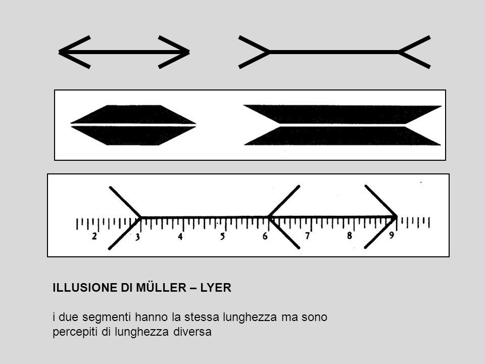 ILLUSIONE DI MÜLLER – LYER i due segmenti hanno la stessa lunghezza ma sono percepiti di lunghezza diversa