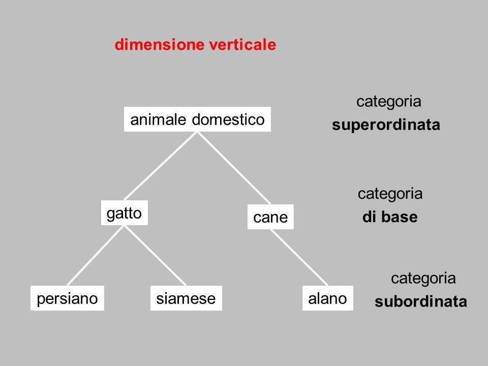 dimensione verticale gatto siamesepersiano cane animale domestico alano categoria di base categoria subordinata categoria superordinata