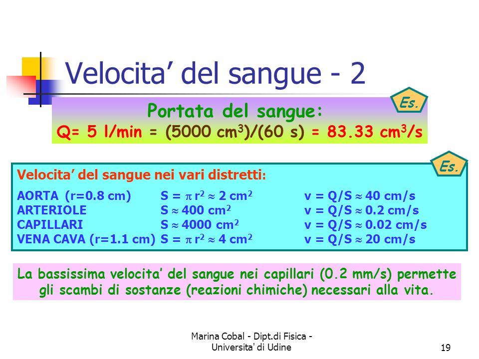 Marina Cobal - Dipt.di Fisica - Universita' di Udine18 Velocita del sangue - 1 5000 4000 3000 2000 1000 S cm 2 5000 4000 3000 2000 1000 cm 2 25 400 45