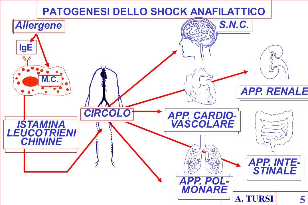 A. TURSI 5 PATOGENESI DELLO SHOCK ANAFILATTICO CIRCOLO Allergene IgE M.C. ISTAMINA LEUCOTRIENI CHININE APP. RENALE APP. INTE- STINALE APP. POL- MONARE