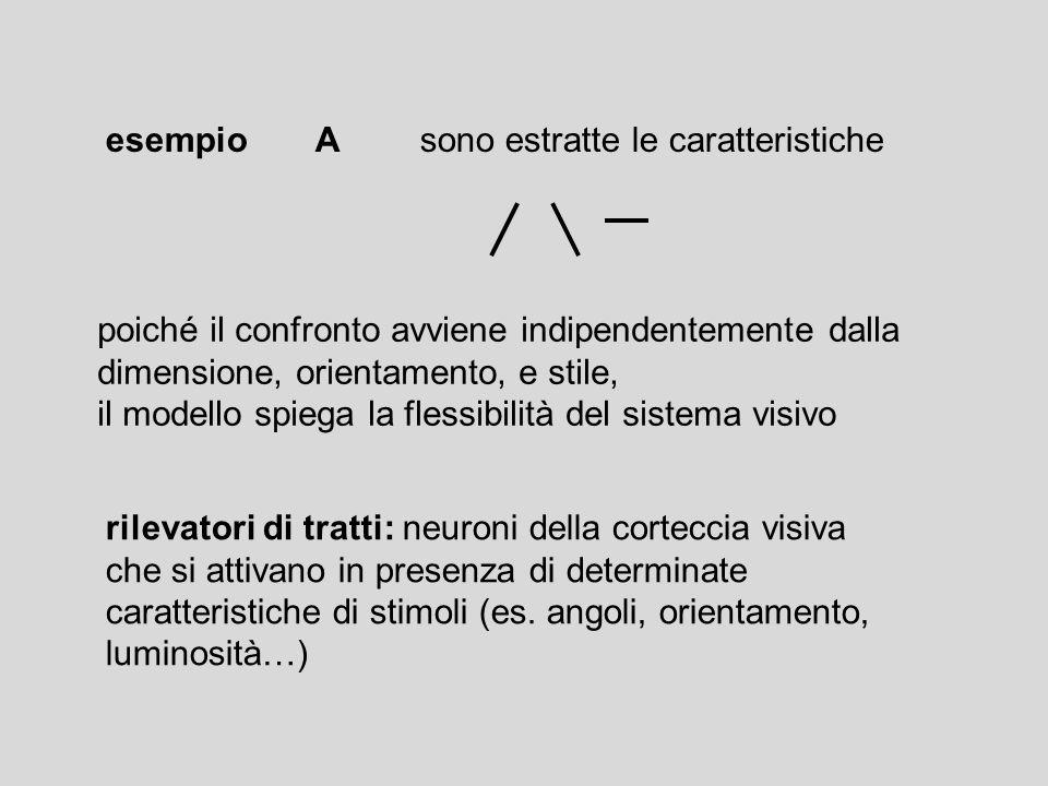 rilevatori di tratti: neuroni della corteccia visiva che si attivano in presenza di determinate caratteristiche di stimoli (es. angoli, orientamento,