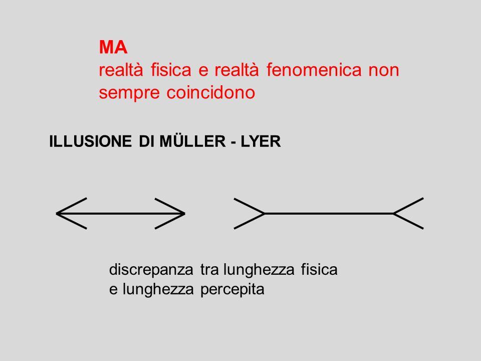 MA realtà fisica e realtà fenomenica non sempre coincidono ILLUSIONE DI MÜLLER - LYER discrepanza tra lunghezza fisica e lunghezza percepita