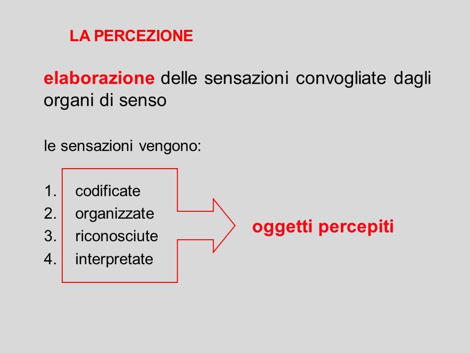 elaborazione delle sensazioni convogliate dagli organi di senso le sensazioni vengono: 1.codificate 2.organizzate 3.riconosciute 4.interpretate oggett