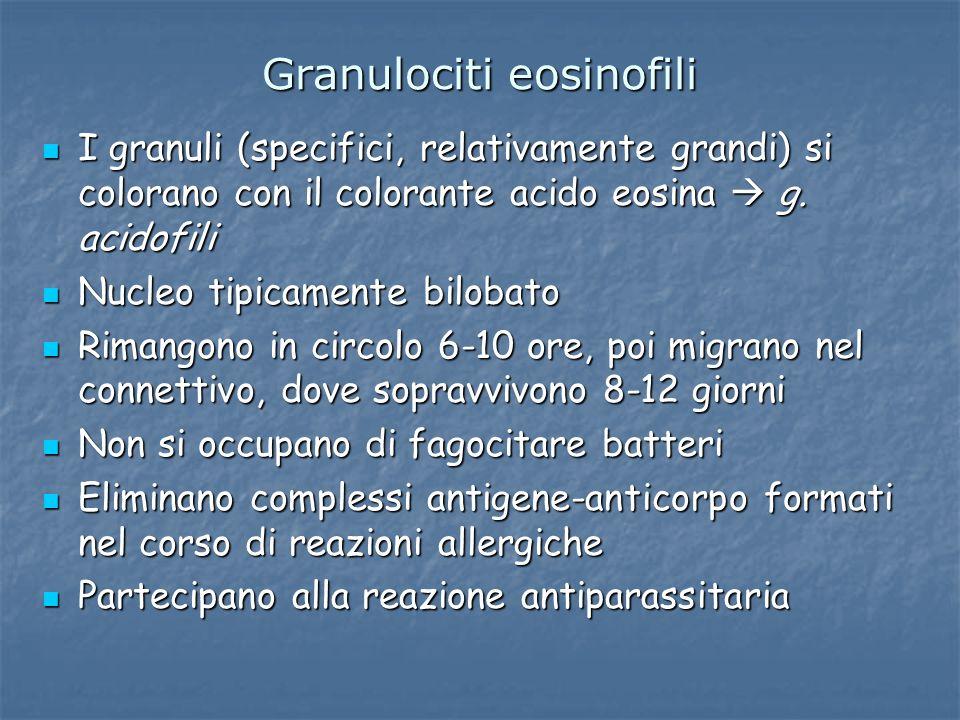 Granulociti eosinofili I granuli (specifici, relativamente grandi) si colorano con il colorante acido eosina g. acidofili I granuli (specifici, relati