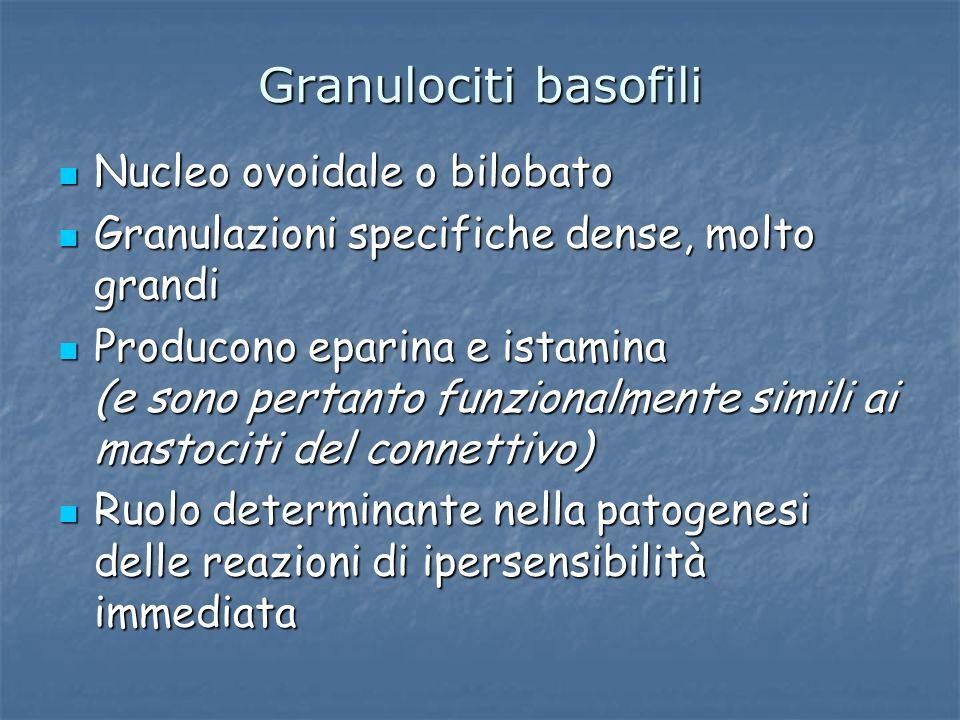 Granulociti basofili Nucleo ovoidale o bilobato Nucleo ovoidale o bilobato Granulazioni specifiche dense, molto grandi Granulazioni specifiche dense,