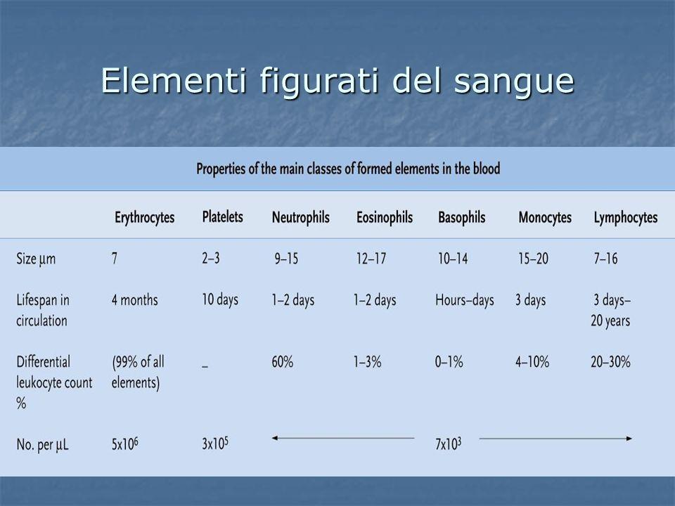 Fagocitosi 6 Al termine del processo, il materiale degradato (corpo residuo) può essere espulso dalla cellule attraverso lesocitosi