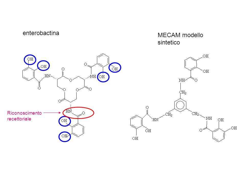 enterobactina MECAM modello sintetico Riconoscimento recettoriale