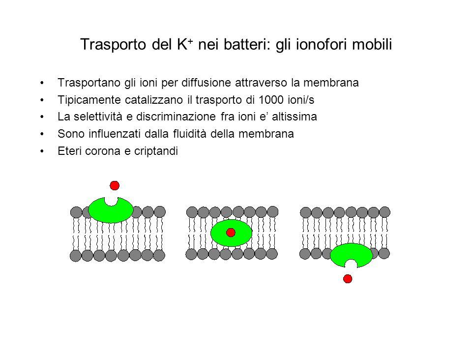 Trasporto del K + nei batteri: gli ionofori mobili Trasportano gli ioni per diffusione attraverso la membrana Tipicamente catalizzano il trasporto di