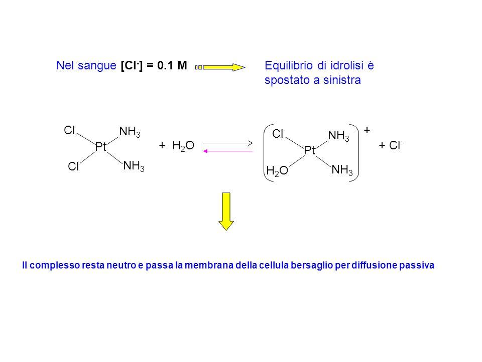 Pt Cl NH 3 + H 2 O Pt + Cl - Cl NH 3 H2OH2O + Nel sangue [Cl - ] = 0.1 MEquilibrio di idrolisi è spostato a sinistra Il complesso resta neutro e passa