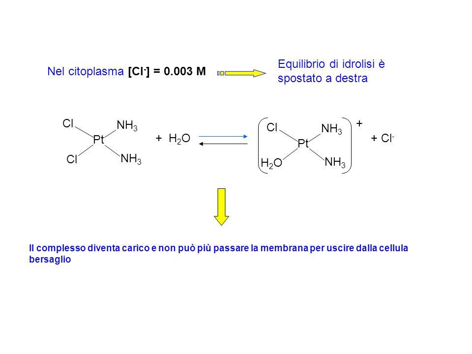 Nel citoplasma [Cl - ] = 0.003 M + H 2 O+ Cl - Pt Cl NH 3 Pt Cl NH 3 H2OH2O + Equilibrio di idrolisi è spostato a destra Il complesso diventa carico e