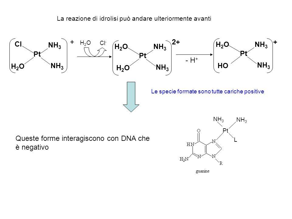 Pt Cl NH 3 H2OH2O + H2OH2O Cl - Pt H2OH2O NH 3 H2OH2O 2+ - H + Pt H2OH2O NH 3 HO + Queste forme interagiscono con DNA che è negativo Pt NH 3 L La reaz