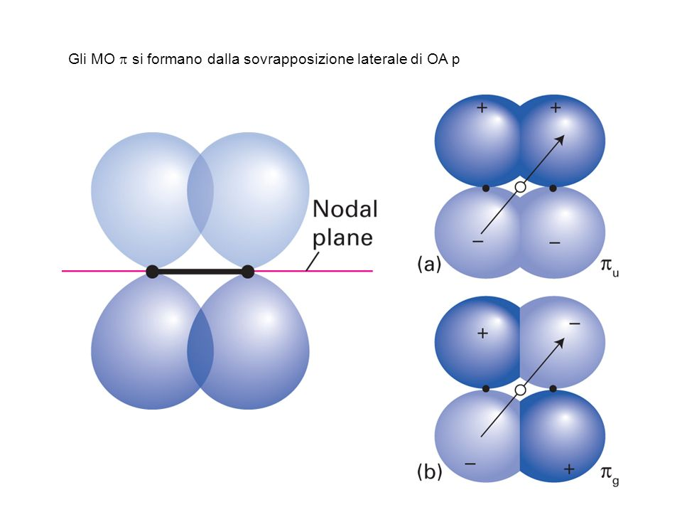 Gli MO si formano dalla sovrapposizione laterale di OA p