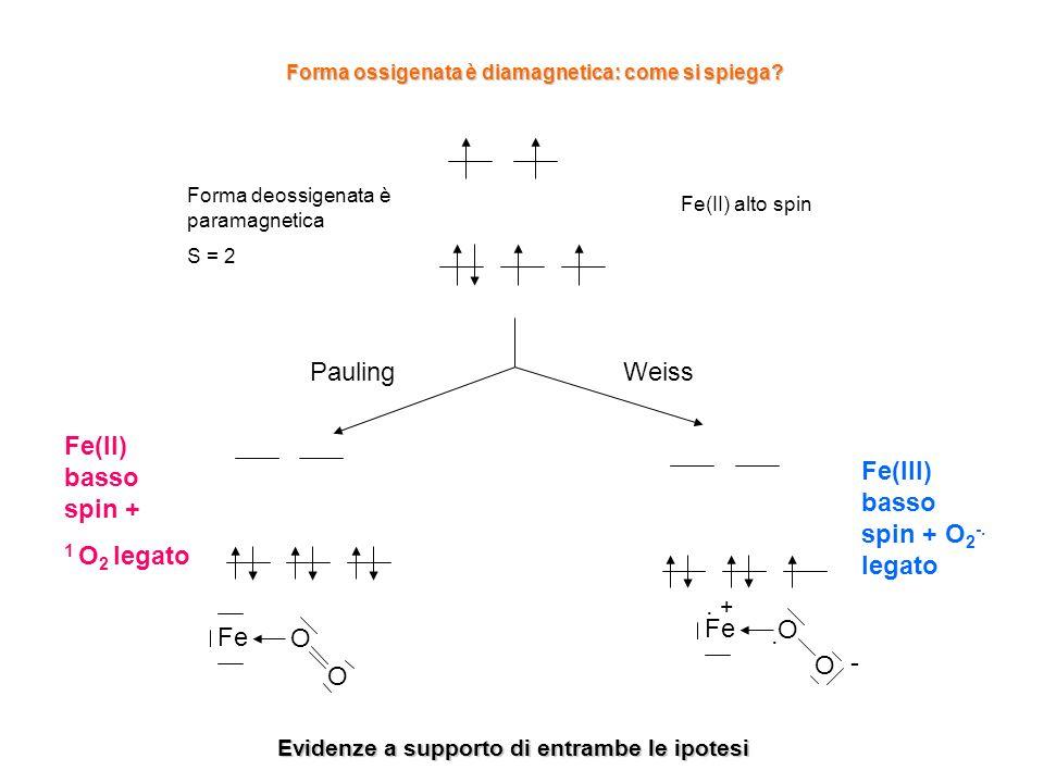 Fe(II) alto spin Forma deossigenata è paramagnetica S = 2 Pauling Fe(II) basso spin + 1 O 2 legato Weiss Fe(III) basso spin + O 2 -. legato. + Fe O O