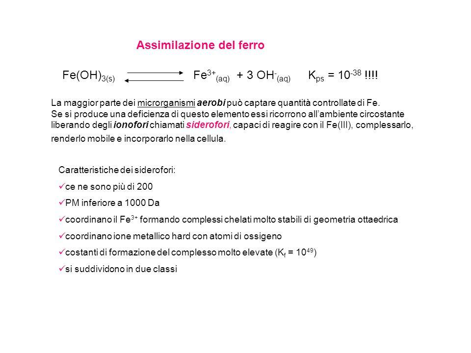 Fe(OH) 3(s) Fe 3+ (aq) + 3 OH - (aq) K ps = 10 -38 !!!! Assimilazione del ferro La maggior parte dei microrganismi aerobi può captare quantità control