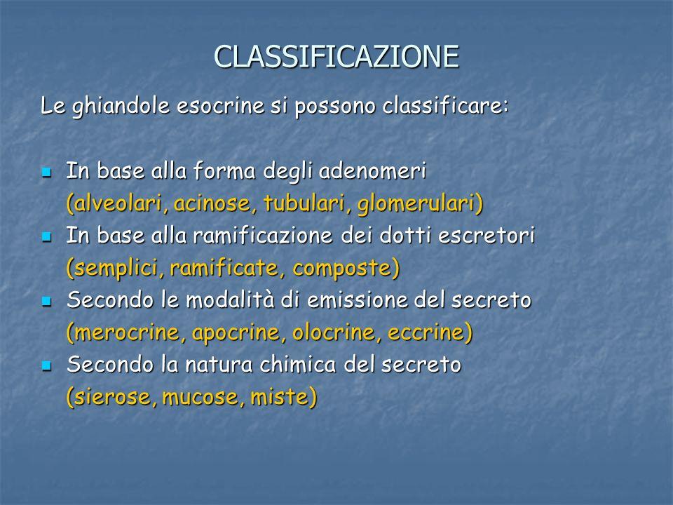 CLASSIFICAZIONE Le ghiandole esocrine si possono classificare: In base alla forma degli adenomeri In base alla forma degli adenomeri (alveolari, acino