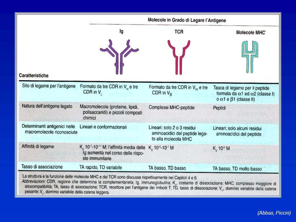 Le immunoglobuline D (Abbas, Piccin)