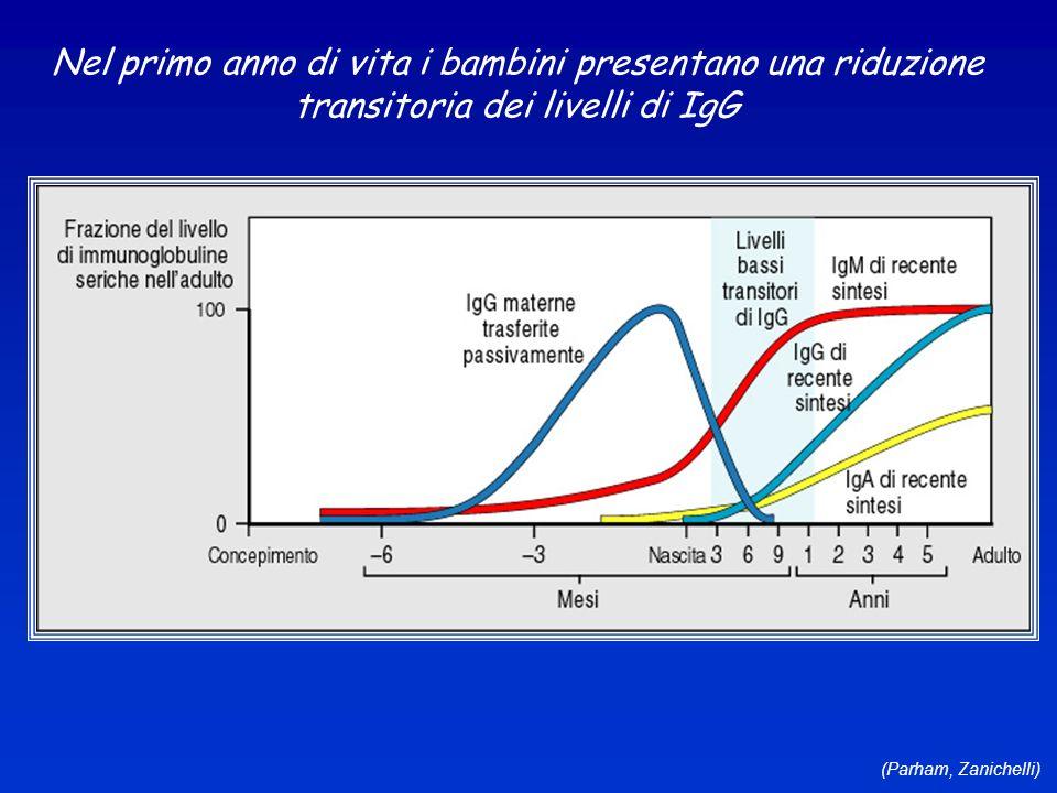 (Parham, Zanichelli) Nel primo anno di vita i bambini presentano una riduzione transitoria dei livelli di IgG