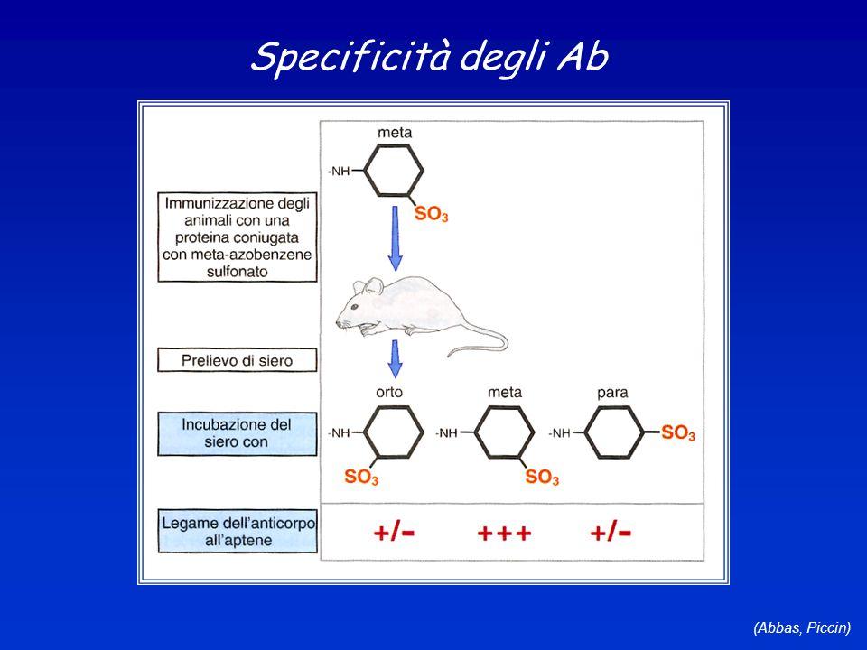 Interazione Ag/Ab Il legame Ag/Ab è NON covalente Dovuto a: 1.