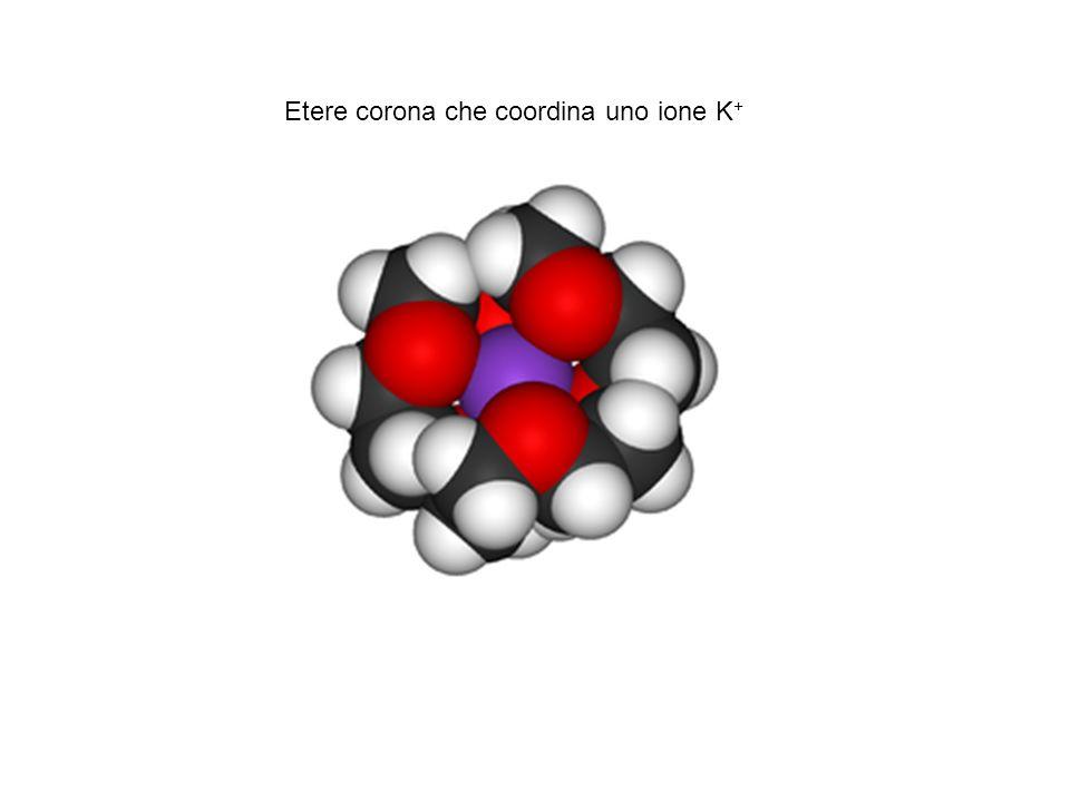 Etere corona che coordina uno ione K +
