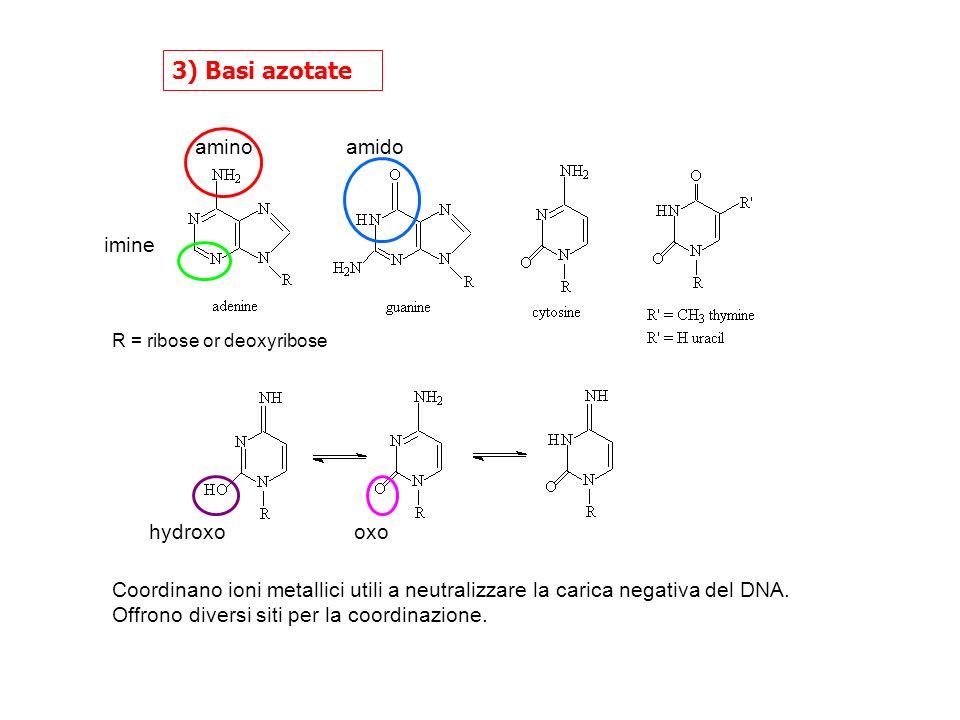 3) Basi azotate imine aminoamido oxohydroxo R = ribose or deoxyribose Coordinano ioni metallici utili a neutralizzare la carica negativa del DNA.