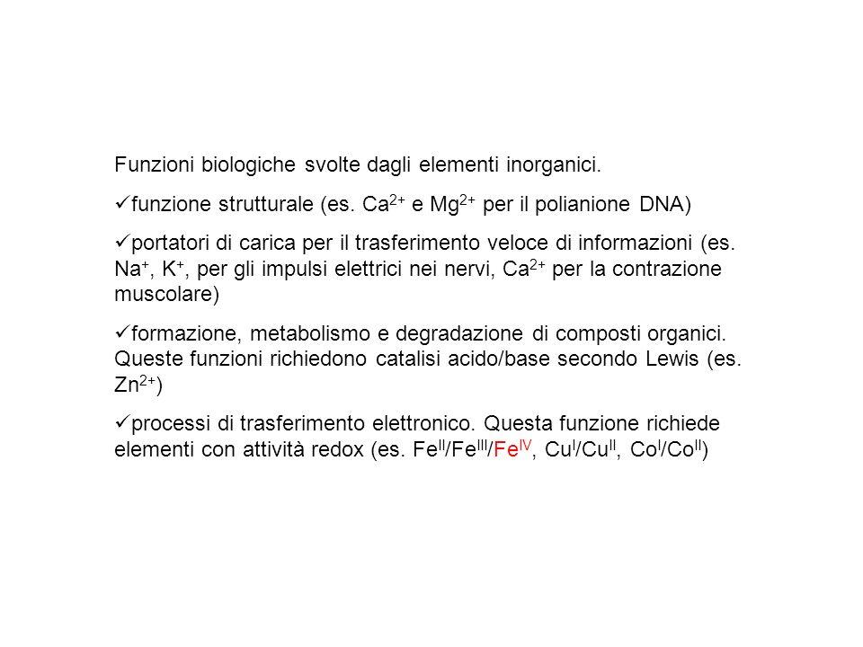 Funzioni biologiche svolte dagli elementi inorganici. funzione strutturale (es. Ca 2+ e Mg 2+ per il polianione DNA) portatori di carica per il trasfe