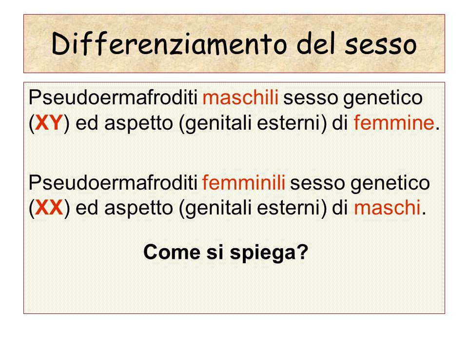 Differenziamento del sesso Pseudoermafroditi maschili sesso genetico (XY) ed aspetto (genitali esterni) di femmine. Pseudoermafroditi femminili sesso