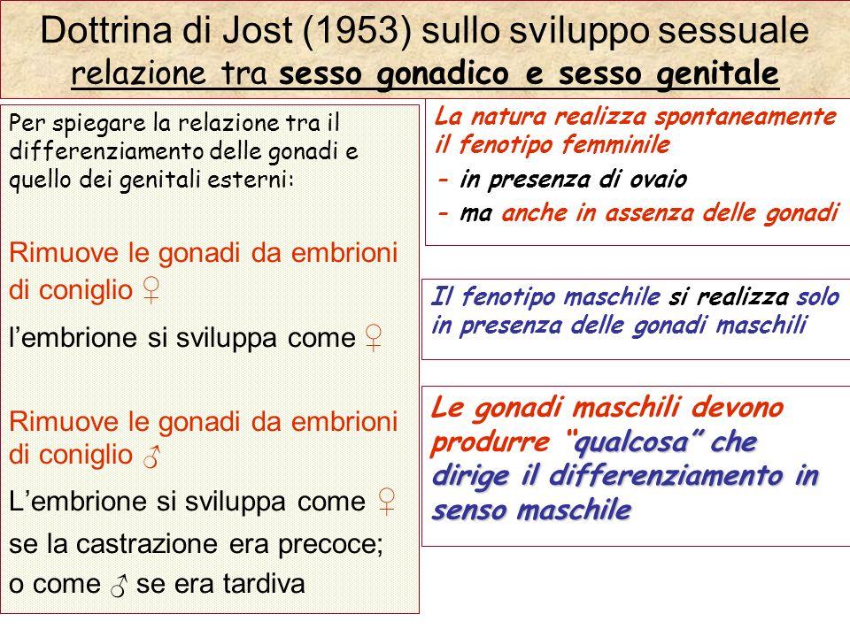 Dottrina di Jost (1953) sullo sviluppo sessuale relazione tra sesso gonadico e sesso genitale Per spiegare la relazione tra il differenziamento delle