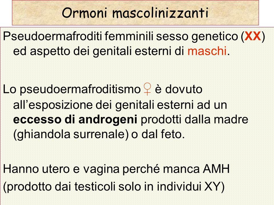 Pseudoermafroditi femminili sesso genetico (XX) ed aspetto dei genitali esterni di maschi. Lo pseudoermafroditismo è dovuto allesposizione dei genital