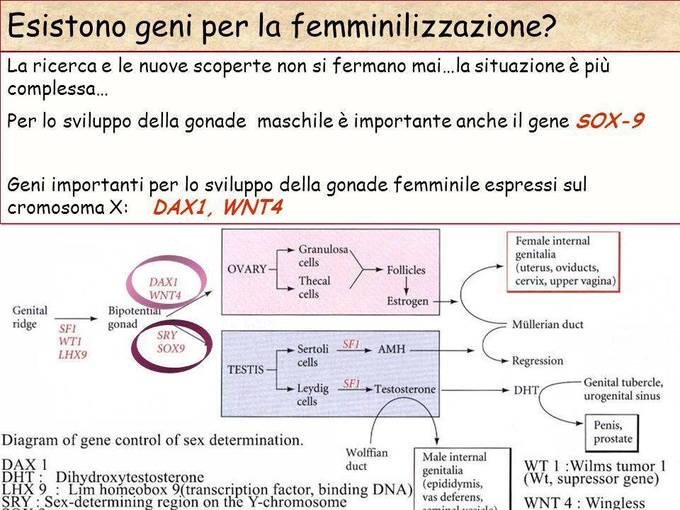 (Modified from Gilbert 2006) Esistono geni per la femminilizzazione? La ricerca e le nuove scoperte non si fermano mai…la situazione è più complessa…