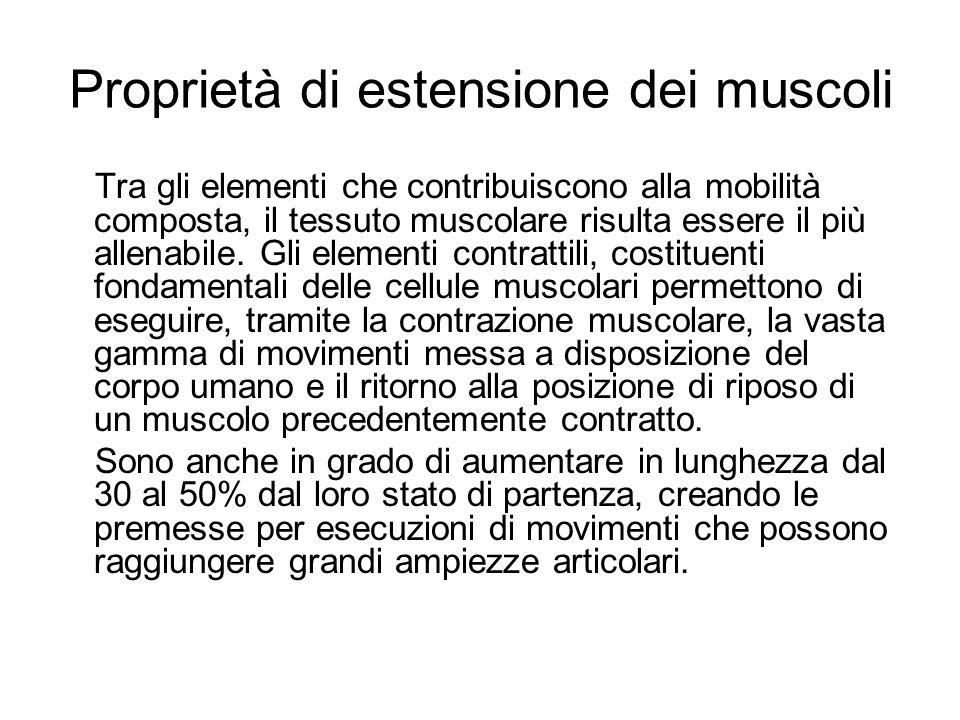 Proprietà di estensione dei muscoli Tra gli elementi che contribuiscono alla mobilità composta, il tessuto muscolare risulta essere il più allenabile.