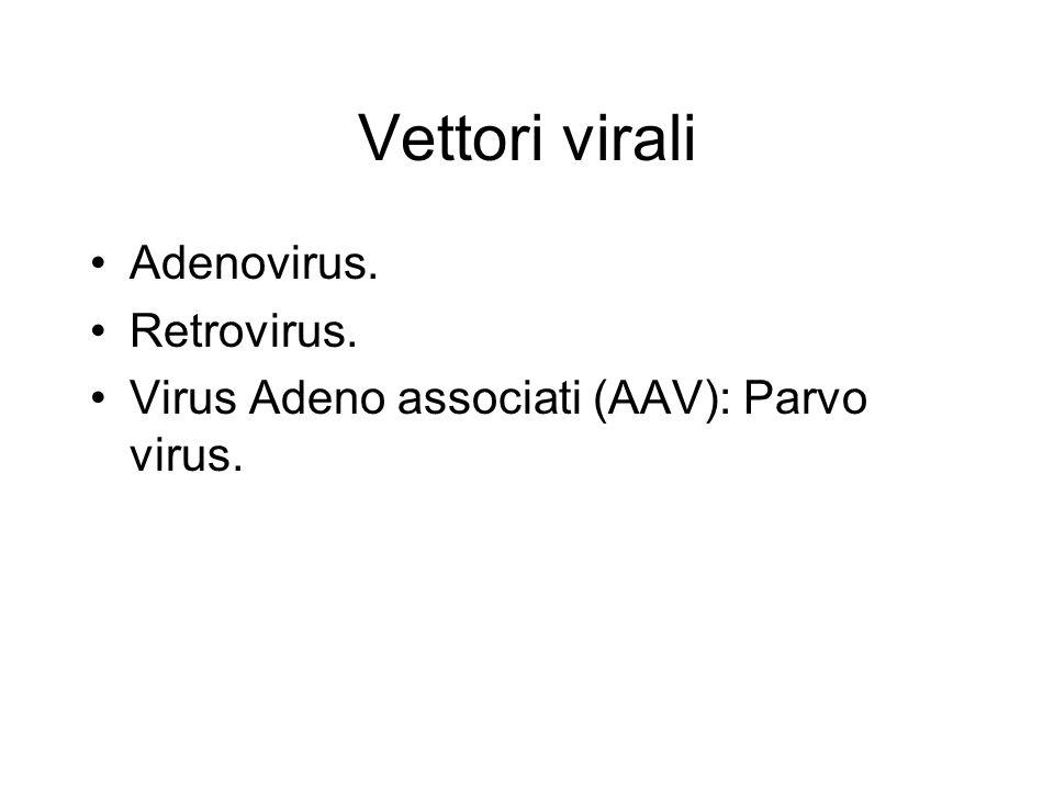 Vettori virali Adenovirus. Retrovirus. Virus Adeno associati (AAV): Parvo virus.