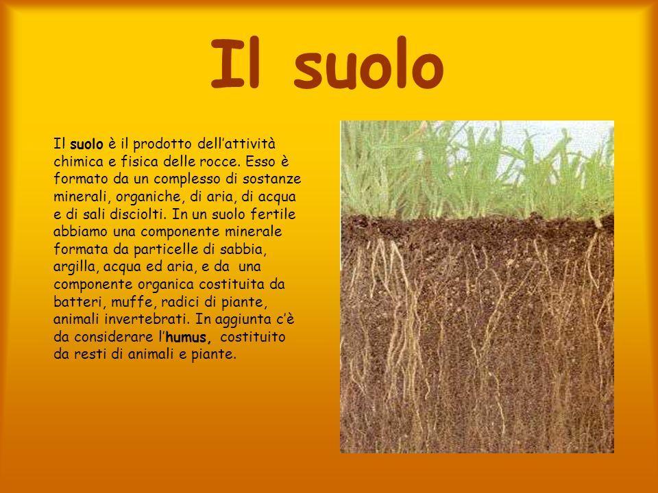 Il suolo Il suolo è il prodotto dellattività chimica e fisica delle rocce. Esso è formato da un complesso di sostanze minerali, organiche, di aria, di