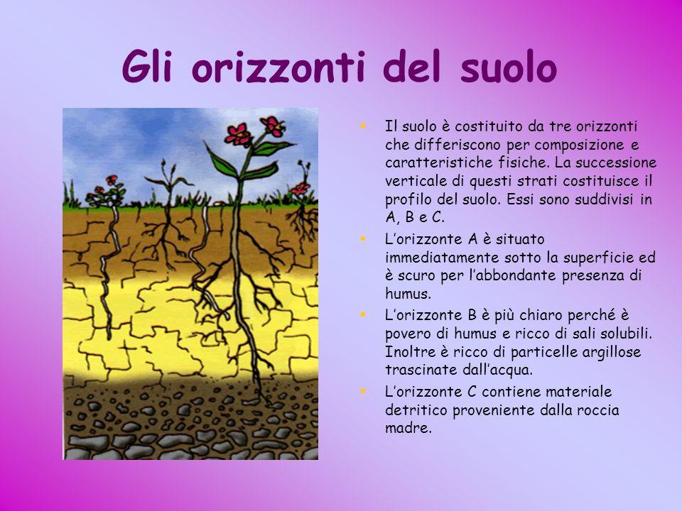 Gli orizzonti del suolo Il suolo è costituito da tre orizzonti che differiscono per composizione e caratteristiche fisiche. La successione verticale d
