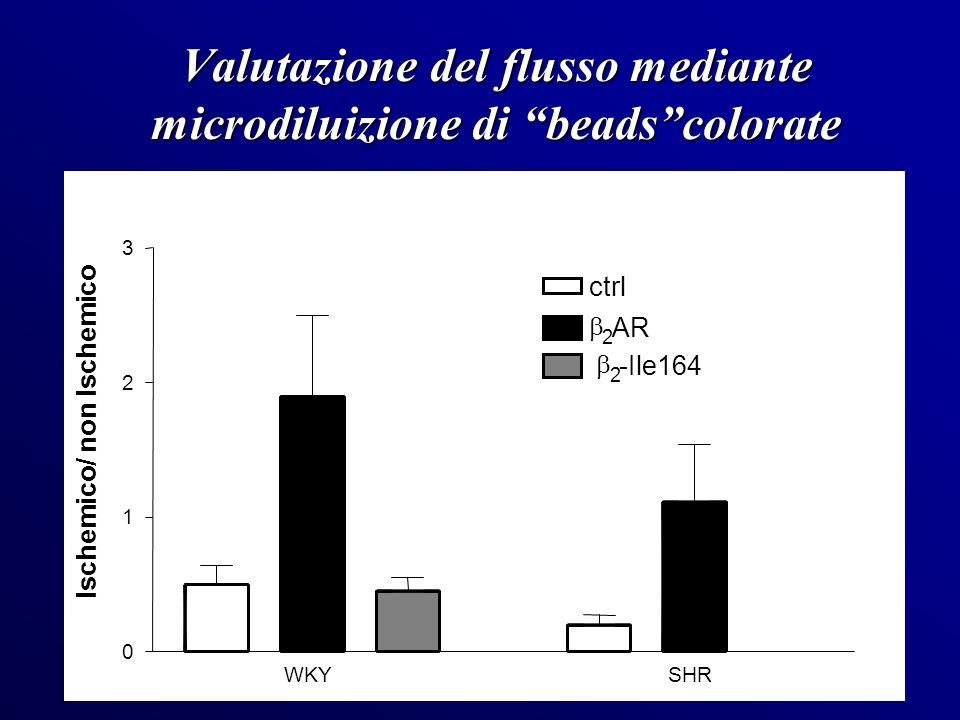 Valutazione del flusso mediante microdiluizione di beadscolorate WKYSHR 0 1 2 3 ctrl 2 AR 2 -Ile164 Ischemico/ non Ischemico
