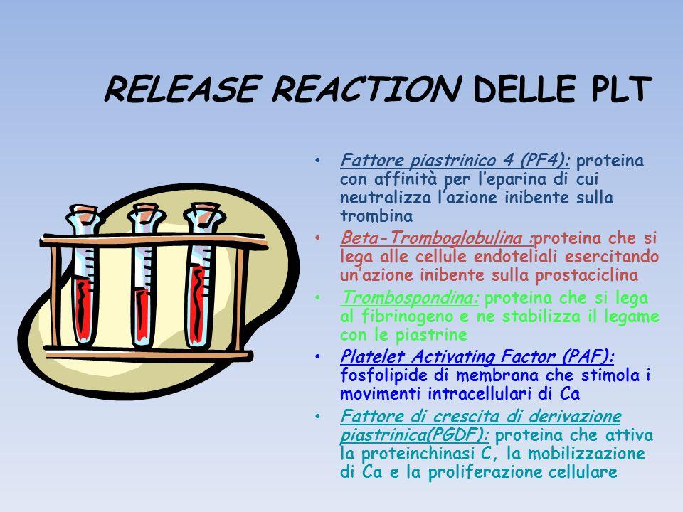 RELEASE REACTION DELLE PLT Fattore piastrinico 4 (PF4): proteina con affinità per leparina di cui neutralizza lazione inibente sulla trombina Beta-Tro